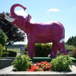 Pink Elephant at Silver Tee